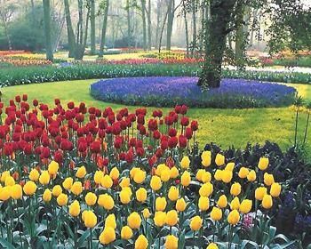 荷兰库肯霍夫 荷兰郁金香公园 深圳荷兰花卉公园 荷兰公园 库肯霍夫